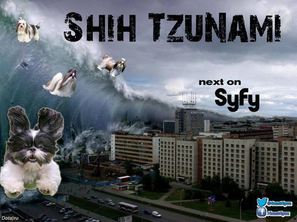 """@4cast4you: New @SyfyTV shows are really going downhill. #ShihTzunami #sharknado2 http://t.co/UwetXc8eIO"""