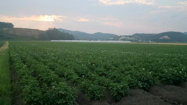 我が家のジャガイモ情報ですご確認ください http://t.co/fz9DoE6Ac8