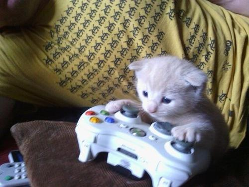 On @Xbox Live, nobody knows you're a cat. Nobody. http://t.co/UOX4dfXTdi