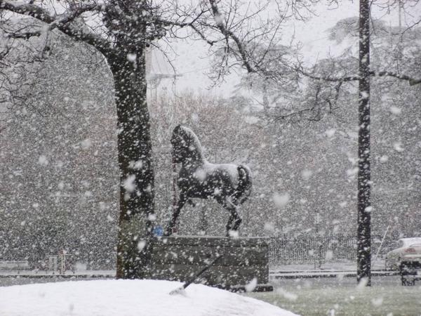 Awesome pic of snow in Ballarat! (via @ballaratcourier) More snow pictures: http://t.co/QlHwKV1TBw http://t.co/rvquSuDh6N