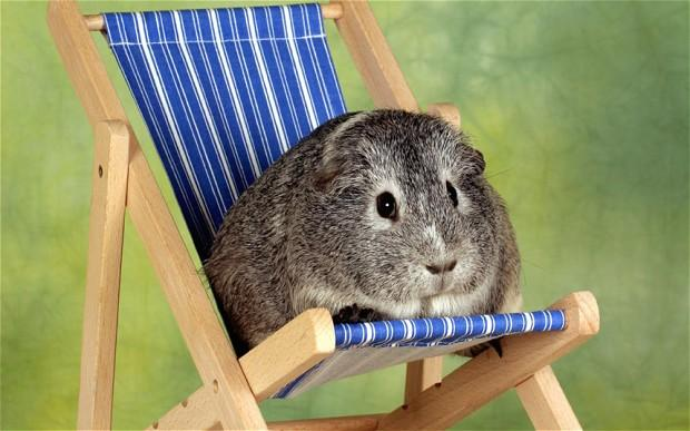 .@BlueCrossEdu study: Owners take pets on holiday to spend 'quality time' with them http://t.co/j9GZCkonAs http://t.co/sgqceikagk