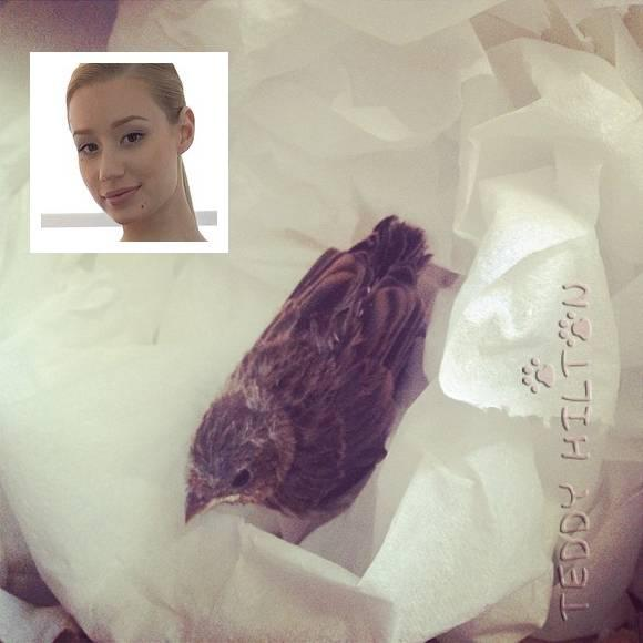 #IggyAzalea Is A Friend Of The Birds! She Saved TWO Baby Finches On Different Days! http://t.co/9OhIzLi5Zd http://t.co/eG8EgKer4d