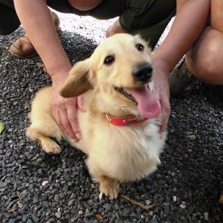 【拡散大希望!】鹿児島県の鹿屋のコンビニで迷い犬さん、明日には保健所に連れていかれるとのこと。飼い主さーーん!!いませんかーー??https://t.co/Emz79GKcIG http://t.co/DcuBNvePcg