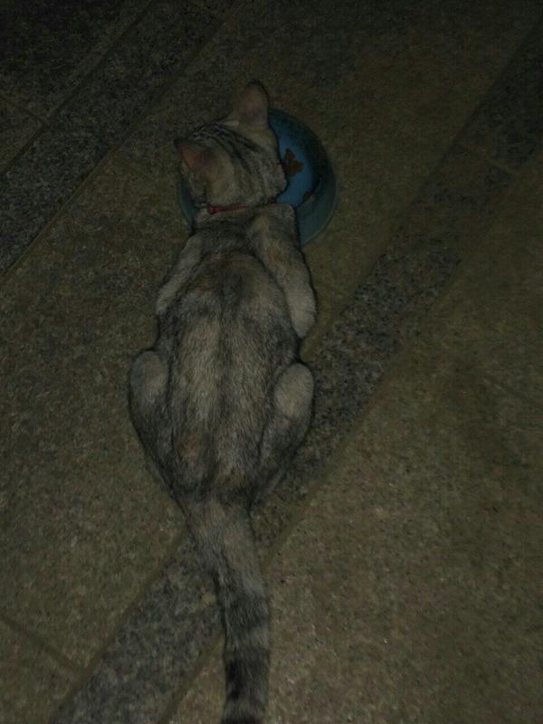 毛色はマーブルで茶色、黒グレー白発見した家の方は家族に餌はあげないようにと言われてこの猫を飼い主が現れるまででも飼うことはできません。保健所に渡されてしまうようですので早い情報を求めています!飼い主さん、飼い主を知る方は連絡ください。 http://t.co/0y7ZCQpY11