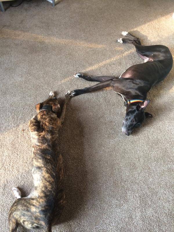 @pupaid New friendships forming. All rescue dogs, Twiglet, Bruno and Baz. #AdoptDontShop http://t.co/x7Xy0zFVBd