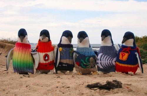 #penguinsinjumpers http://t.co/TMEn6oTWoC