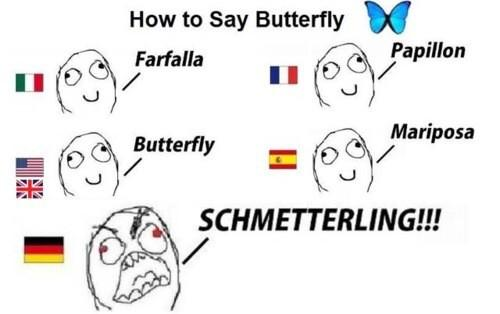 Image result for german butterfly french spanish