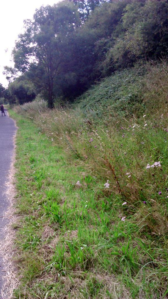 So @DevonCC @Love_plants cutting here seems sensible as it stops encroachment on the path & leaves 2m for the plants http://t.co/6gm6rd8OFg