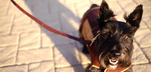 In a truly #Glasgow2014 twist…each team is led by a Scottish Terrier bearing the team's name! #2014Ceremony http://t.co/8Sgg5YB1hU