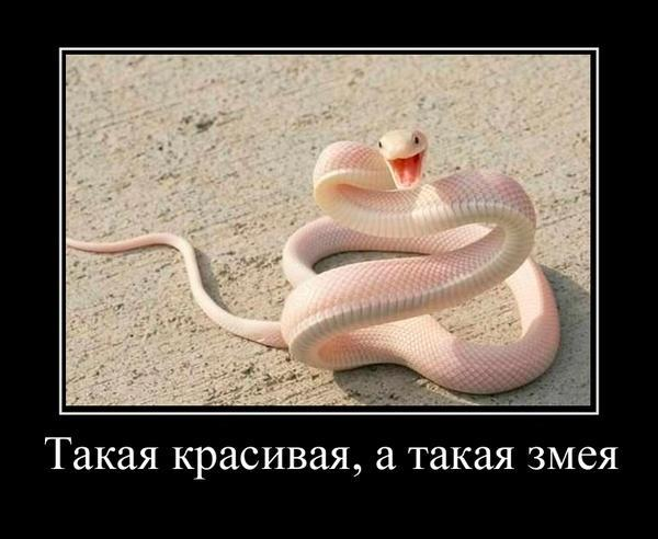 Картинки горизонтальные, картинки про змей с надписями