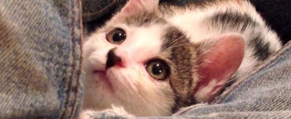 【RT1100UP】 とっておきの猫動画、目の見えない猫を保護した人の1か月の記録映像、そしてその後・・・