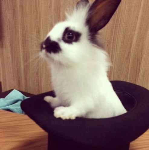 On Tuesday we had the pleasure of meeting this beautiful bunny. Now we're suffering from severe abandonment issues… http://t.co/ifXNakd0hA