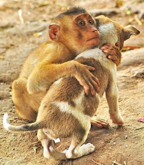 «@idclrWorldPeace RT @RexGray_: RT @rejuvapet: Everybody needs a hug sometimes... http://t.co/6asZ1mjLQZ | I Declare World #Peace #IDWP»