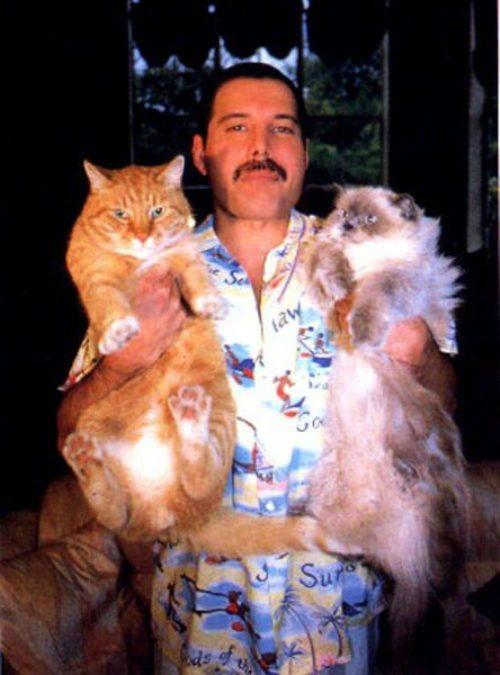 "The most beautiful picture on the internet: ""@HistoryInPics Freddie Mercury with his cats, Oscar and Tiffany http://t.co/4FKesObRHB"""