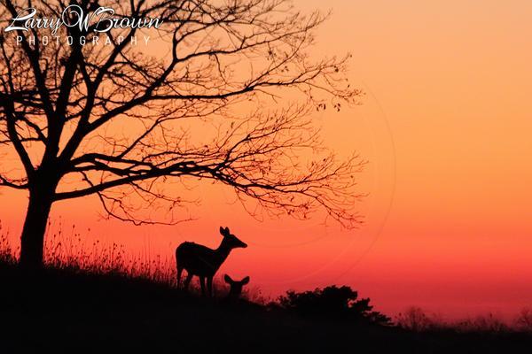 """@larrywbrown: #Daybreak in Big Meadows at #Shenandoah National Park, #Virginia #VaOutdoors #LoveVA #NationalParks http://t.co/lK1bGgre64"""