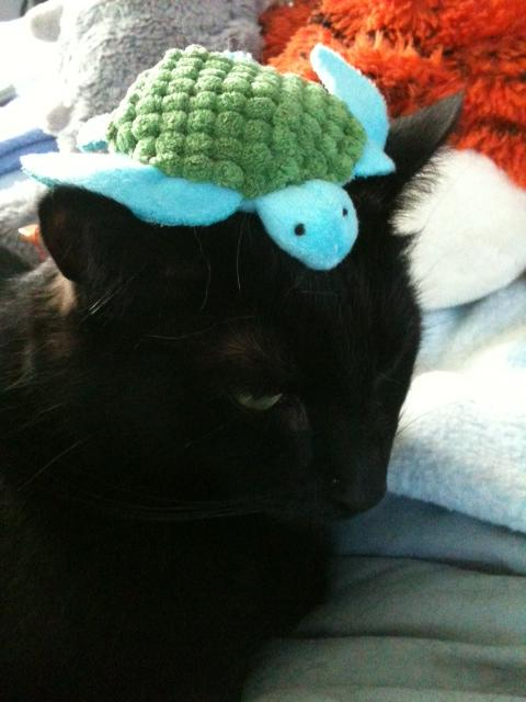 @kittehboi @KushPanfur @NancyCakeFace @ZobyDoby1 @PantherQueen @Cool_Cat_ @LeroyBlackCat Yup! dis my #nipturtle :D http://t.co/ybjhNgbbZq