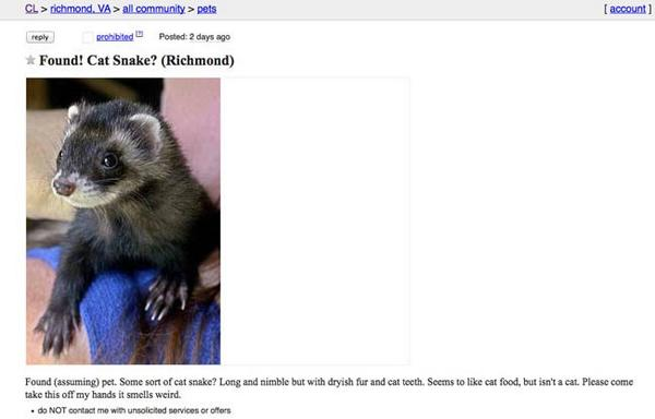 Craigslist wtf: rare 'cat snake' creature found in richmond