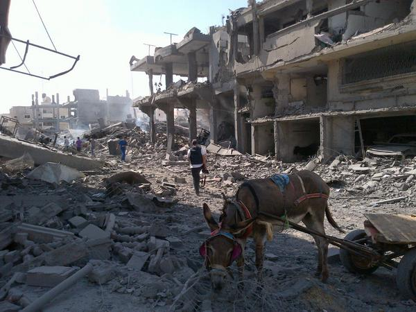 Donkeys roam around unattended in areas of N. #Gaza shredded up Israeli bombing http://t.co/RKzvGTYgDT