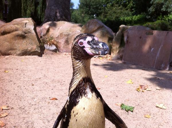 Here's How The Gay Penguins At The London Zoo Celebrated Pride