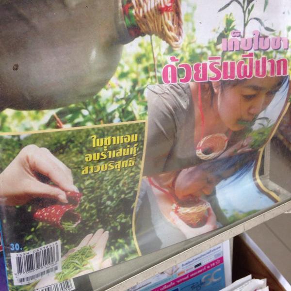 เพิ่งเคยเห็น ใบชาพรีเมี่ยม เก็บด้วยริมฝีปากสาวบริสุทธิ์ !!! http://t.co/fBtndhdCtO