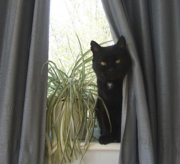 RT @MYSADCAT: My cat is sad because he was hiding behind this curtain and heard you gossiping about what a massive buzzkill he is. http://t…