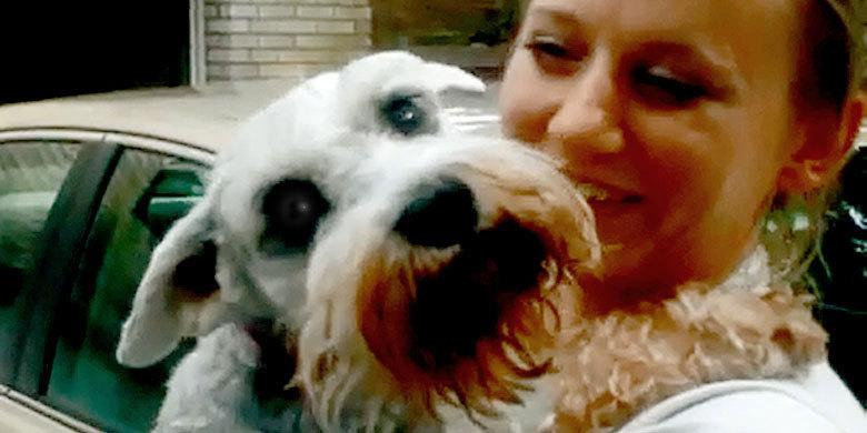 Dog Passes Out From Overwhelming Joy As It's Renunited With It's Owner http://t.co/ywjB843GaD http://t.co/5fOzyEQi8h