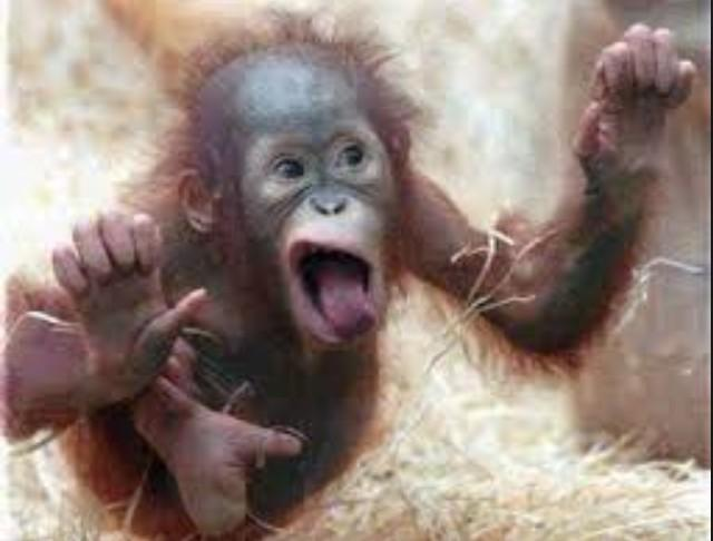 CRAZYYYYY MONKEY 🐒🐒🐒 http://t.co/BzhCjHIbpJ