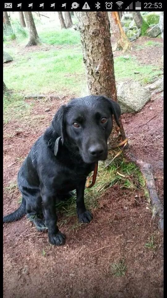 Found in Mournes yesterday - could be from anywhere -contact lost & found pets county Antrim on FB for more details http://t.co/bCfaAJgZ4y