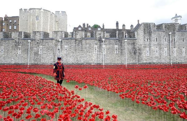 Each one of these poppies represents one British military fatality in WWI  #lestweforget  http://t.co/NNZftMFCwN http://t.co/GhhrkMaYk9