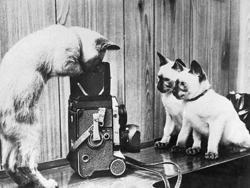 "Media Space on Twitter: ""Are you wondering what a cat using a twin lens  reflex camera would look like? Wonder no longer. It's #MuseumCats day.  http://t.co/59Po9JvyCr"""