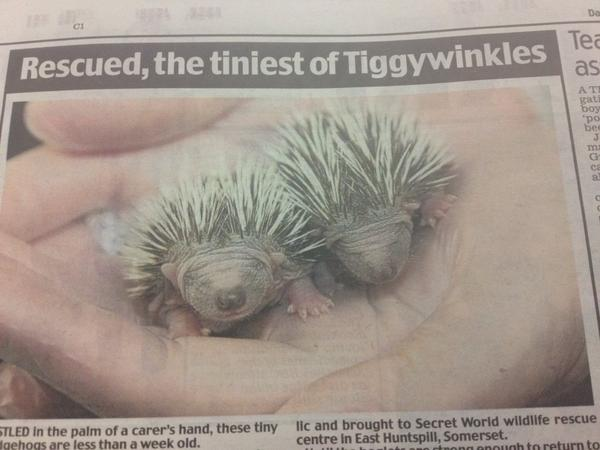 I know the world is going to hell in a hand cart but... Anyone wanna see a picture of some baby hedgehogs?? http://t.co/OQ4XcXf1JB