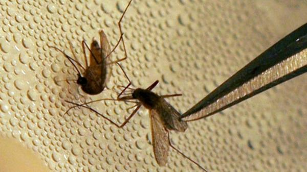 Mosquitoes test positive for West Nile Virus in Toronto: public health http://t.co/UIcblbbXKY http://t.co/wCYKxIYecw