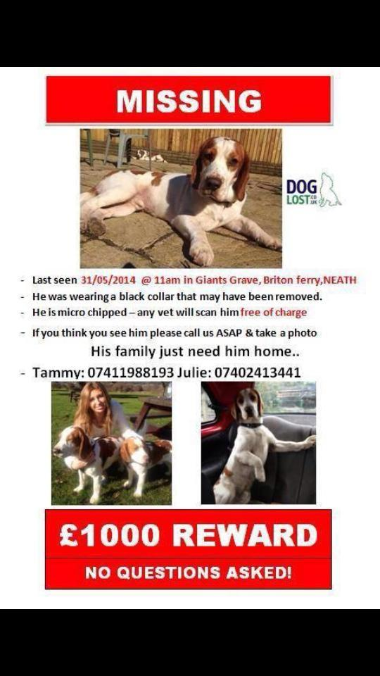 RT @justineemma: @NolanColeen please RT,family is desperate @FindHansum http://t.co/bpVervMpbO