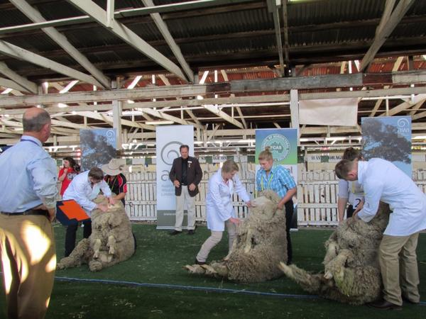 National Young Judges- Merino Sheep #ekka #youthinag #wool http://t.co/RLLraSCWpm