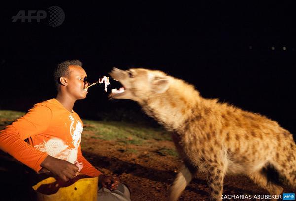 Ethiopia : Harar Ethiopia locals feed hyenas popular
