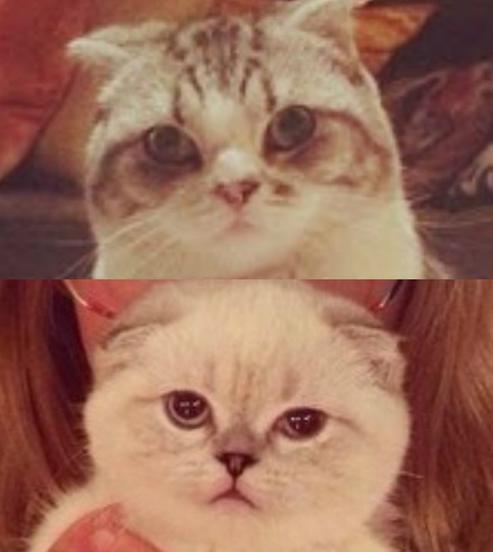 Taylor Swift Cat Meredith And Olivia | www.pixshark.com ...