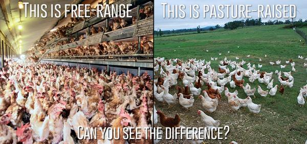 Pasture-raised is better for you, better for the environment and better for our girls – it's as simple as that. http://t.co/xz9CdgB2ox