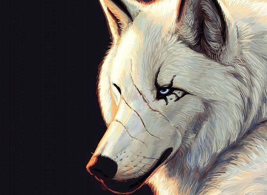 CACHORROS Y ANIMALES Bu9hVrWCcAMW7--