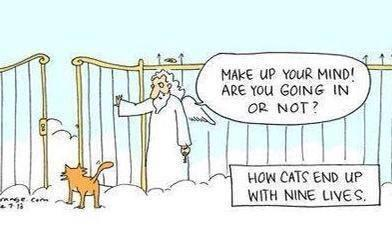 Why a cat has nine lives! #CatholicEdChat http://t.co/ny5tpTveB7