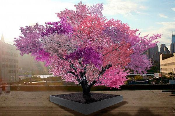Tree Created by Artist Grows 40 Different Types of Fruit http://t.co/2A3VK8tOyT via via @ScienceAlert http://t.co/e5Fltoact0
