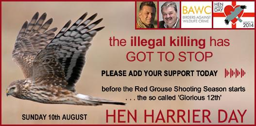 Just 2 clicks to add yr support to stop killing of hen harriers http://t.co/WKm5Mg8KqW #HenHarrierDay  http://t.co/3TFo9Lvp7g