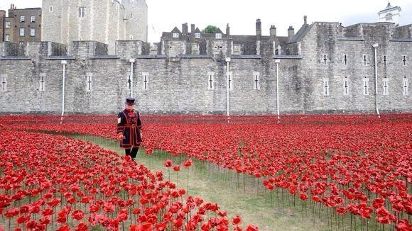Amazing pics being shared of poppies outside The Tower of London. Each representing a British soldier lost in WWI http://t.co/02rYz3fTHu