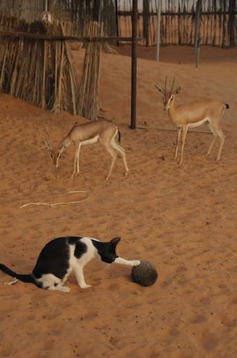 自分の殻に閉じこもっちゃったはりねずみに出てきて欲しいネコたちのそれぞれのアプローチ。 pic.twitter.com/wqLpsAtNXF