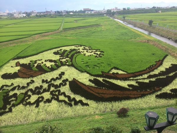 【田んぼアート 8/4】6月に田植えを行った田んぼアートが見ごろを迎えています!見事な作品をぜひその目でご覧ください! http://t.co/7JI2XdnJKl