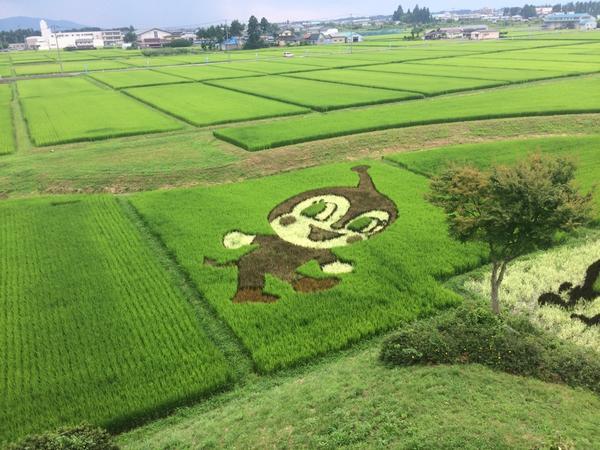 【田んぼアート 8/4】6月に田植えを行った田んぼアートが見ごろを迎えています!見事な作品をぜひその目でご覧ください! http://t.co/GjzFin8cAx