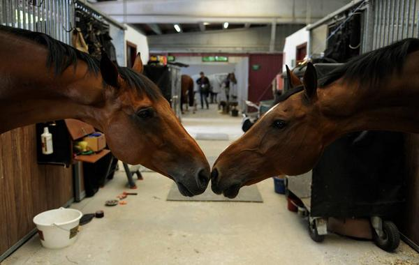 Horse kiss! Behind the scenes at #Furusiyya FEI Nations Cup ™ Jumping in Gijón, Spain #SupportYourNation http://t.co/vS3eiIc4FC