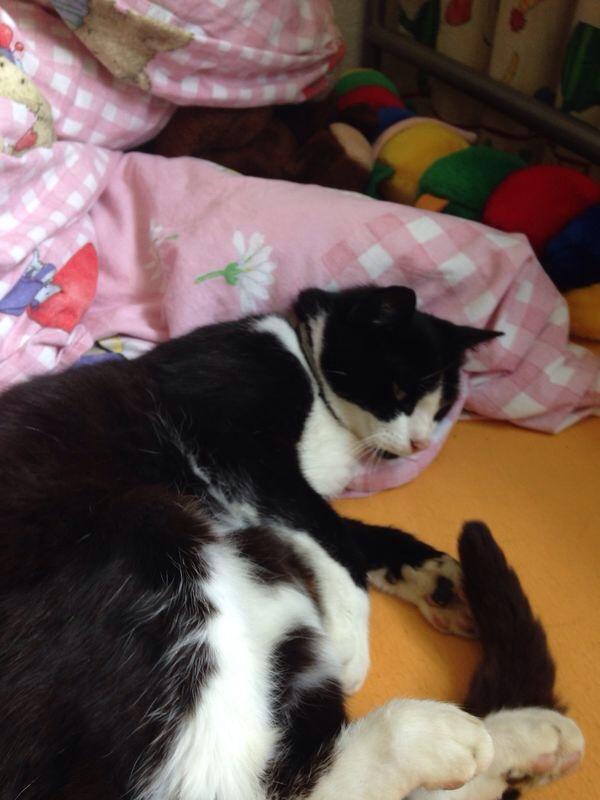 Jemand Interesse an einer weiblichen Katze, 7-jährig, lieb und anhänglich ? Wegen Umzug. http://t.co/jneiMbC4Wp