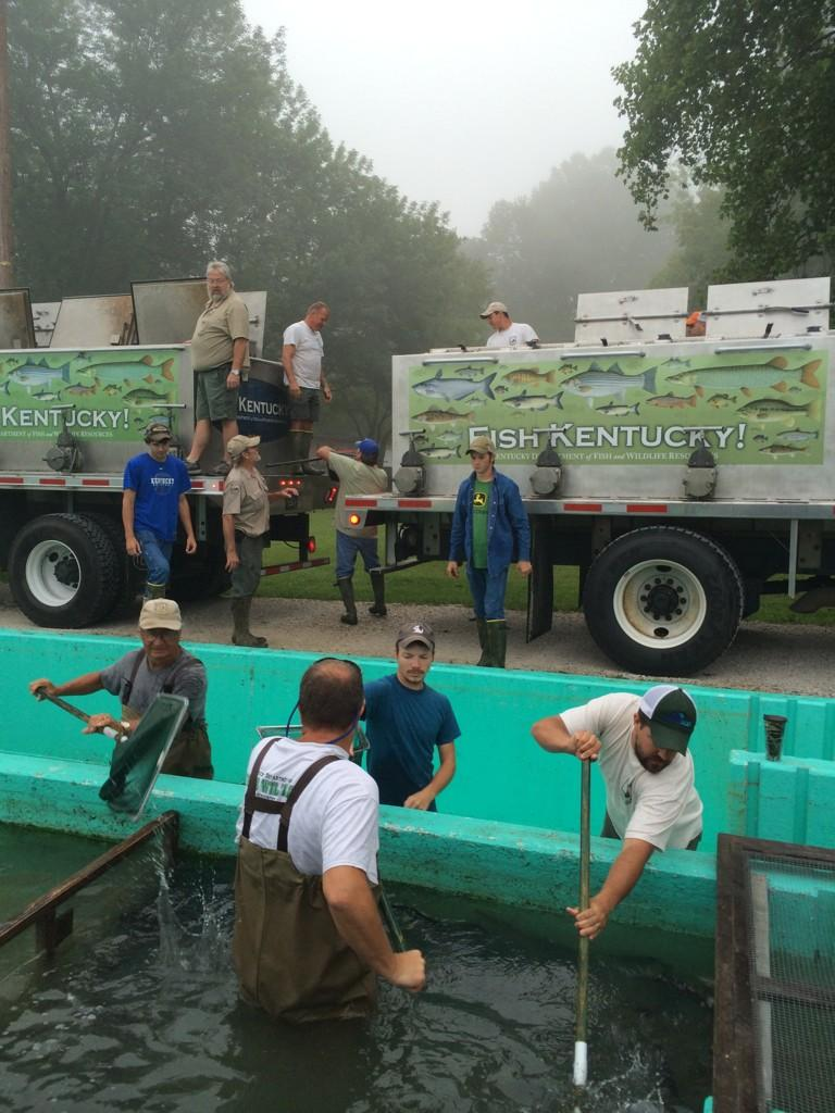 Ky fish hatcheries on twitter loading 8 200 13 inch for Fish hatchery ky