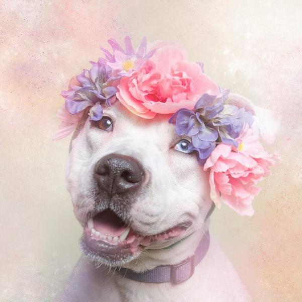 Flower Power! Look at pit bulls with an open heart. http://t.co/PAOSUCMZO5