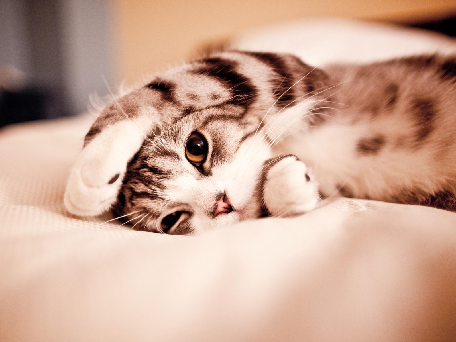 зашла открытки с котиком хочу к тебе говоря, том